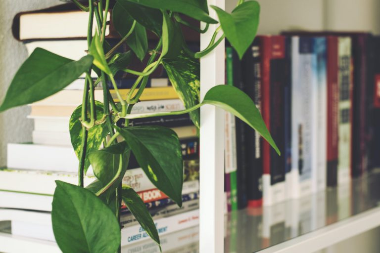 white bookcase with books and a plant